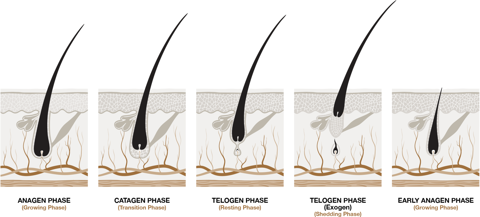 joebloe-hair-loss-process